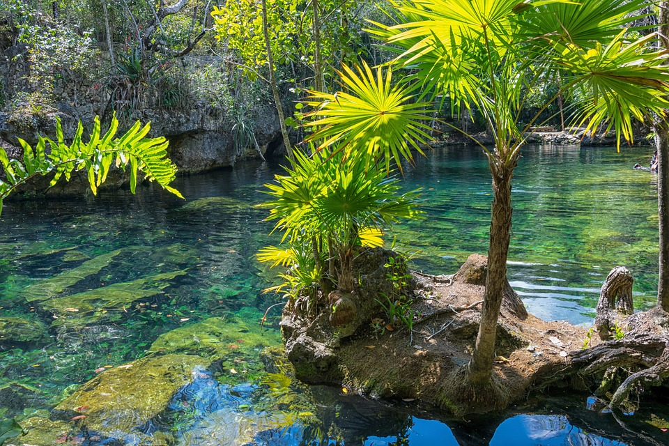 winter sun: river with tropical trees around it.