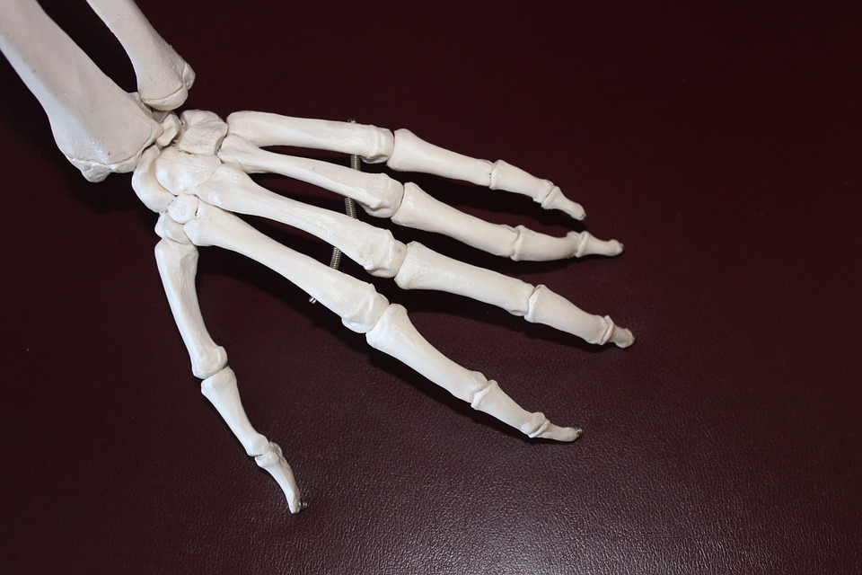 pain free: plastic model of foot and ankle.