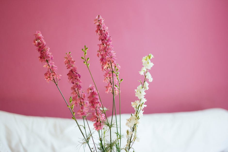Like Love loathe: Pink and white flowers.