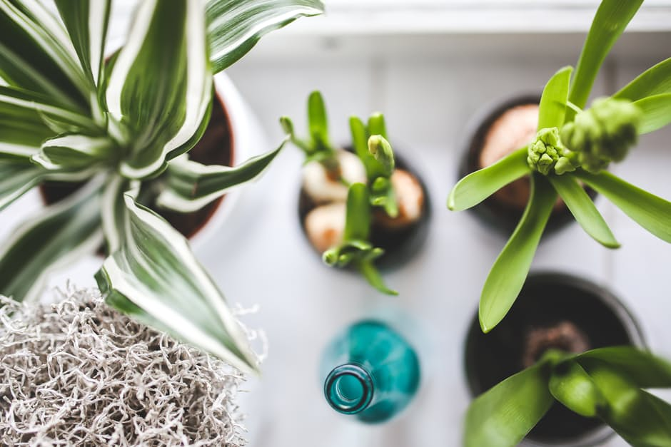 relaxing home: plants on white table.