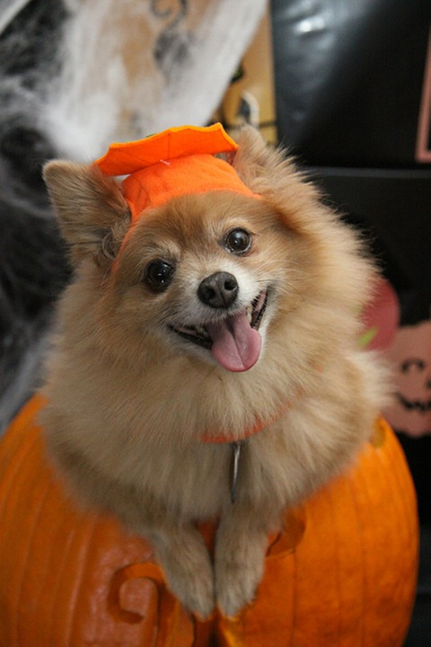 The best Halloween costumes for your dog this year