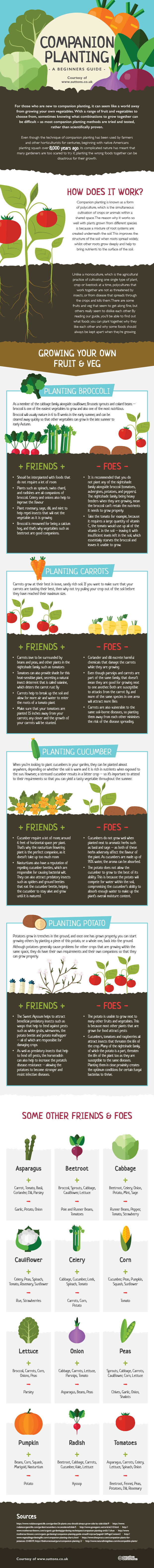 The Beginners Guide to Companion Planting