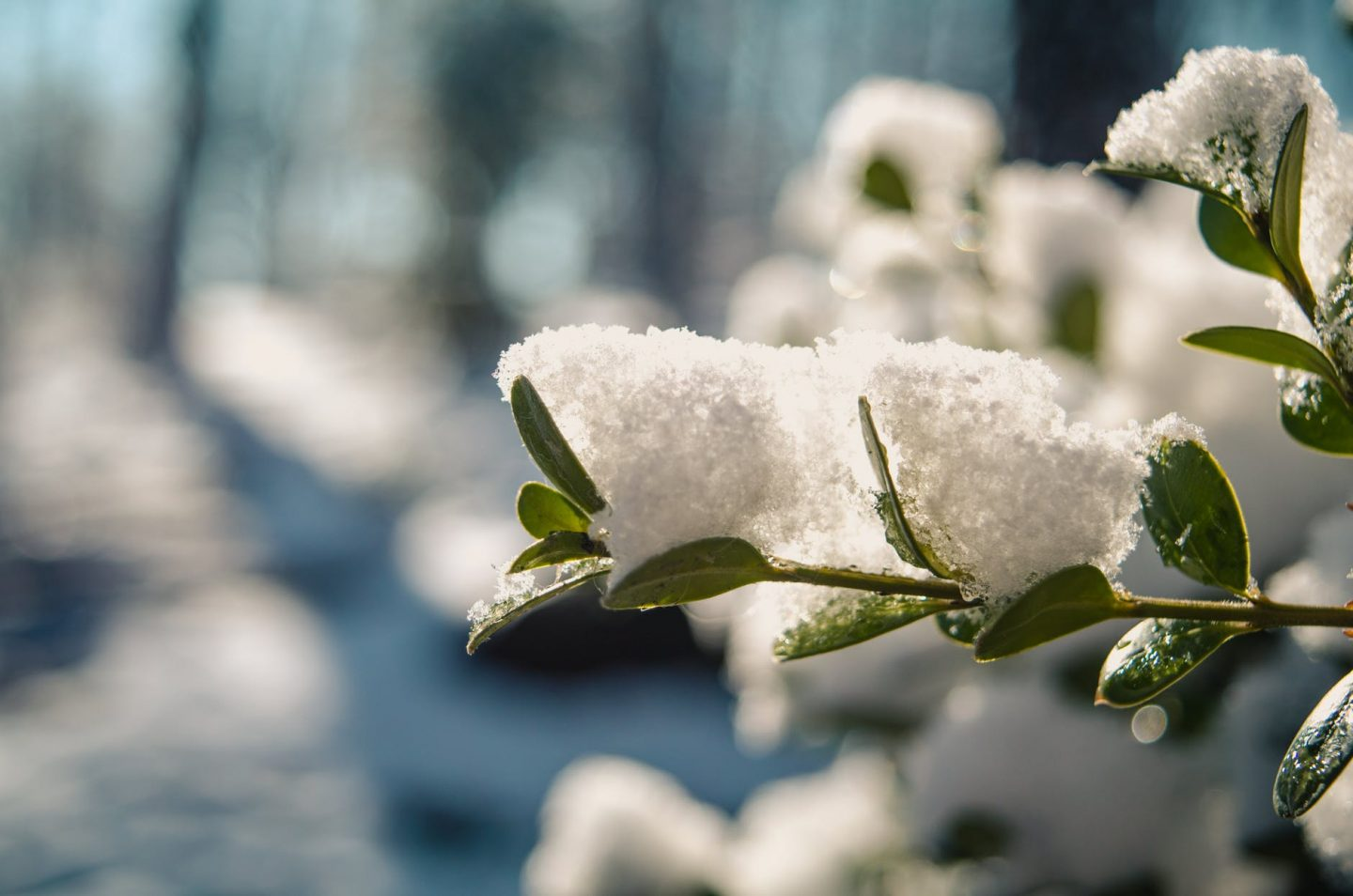 How to Make Sure your Garden Doesn't Come to a Halt During Winter