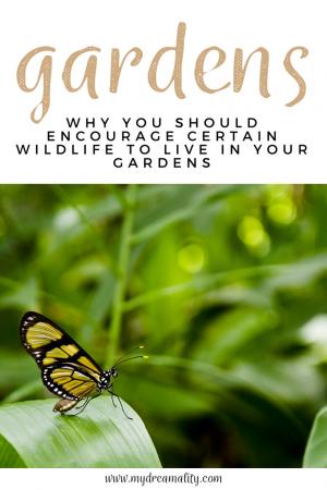 wildlife: Pinterest graphic