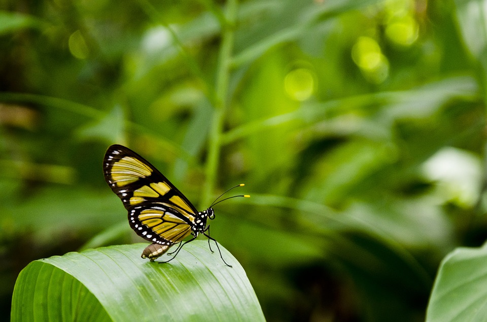 wildlife: yellow and black butterfly on green leaf.