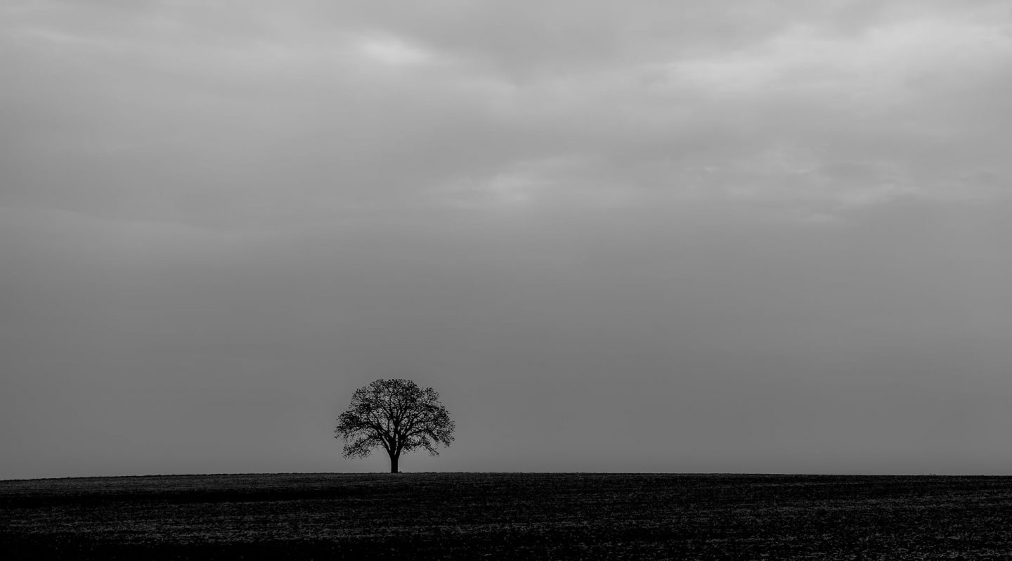 Bare tree in field on very dark cloudy day.