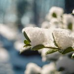 garden during winter: ice on flowers