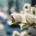 garden during winter: ice on flowers