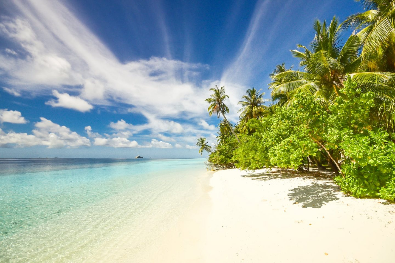 winter sun: Green lush foliage and trees on white sandy beach under blue sky.
