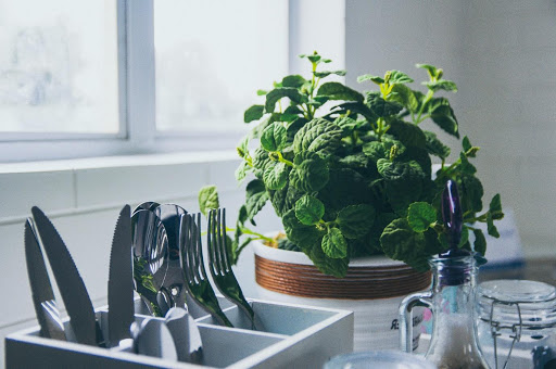 kitchen appear bigger: green plant on kitchen worktop.