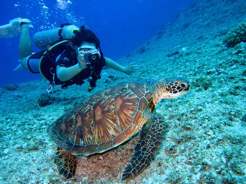 fun honeymoon ideas: person scuba diving and taking photo of turtle underwater.