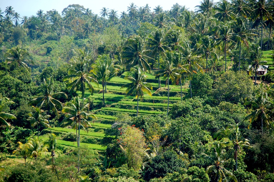 guide to Ubud: lush green fields and trees.