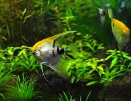 Basics of Aquarium Filtration