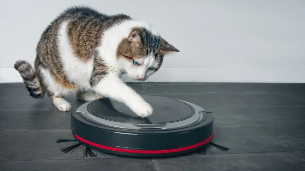 vacuum robots for pet hair: cat playing with one.