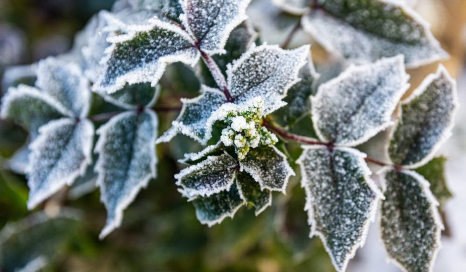 make gardening easier: leaves with ice on them.