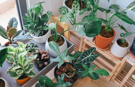 set up a greenhouse: assortment of plants on table.