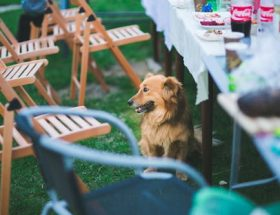 dog sitting by table with party food and drink: top tips on entertaining outdoors during Autumn.