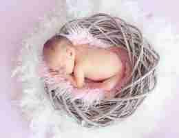 baby in basket: Early pregnancy Development