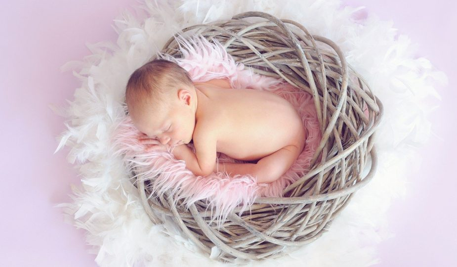 baby in basket: Early pregnancy Development