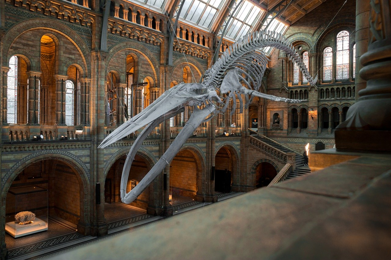 London on a budget: Natural History Museum.