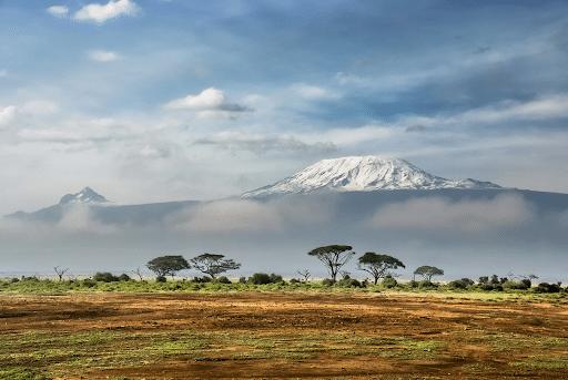 four safari tips