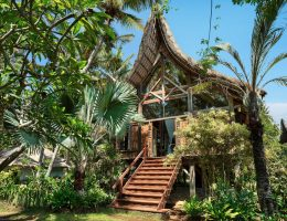 going to Bali: House surrounded by lush green trees.