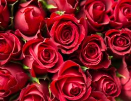 bouquet of red roses: top going away gifts