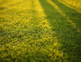 green lawn in sunshine: make lawn care easier