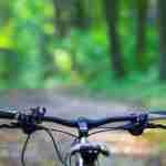 bike ride: bike in the woods.