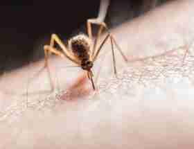 mosquito biting on skin: Best mosquito repellant