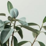 plants alleviate anxiety: indoor plant