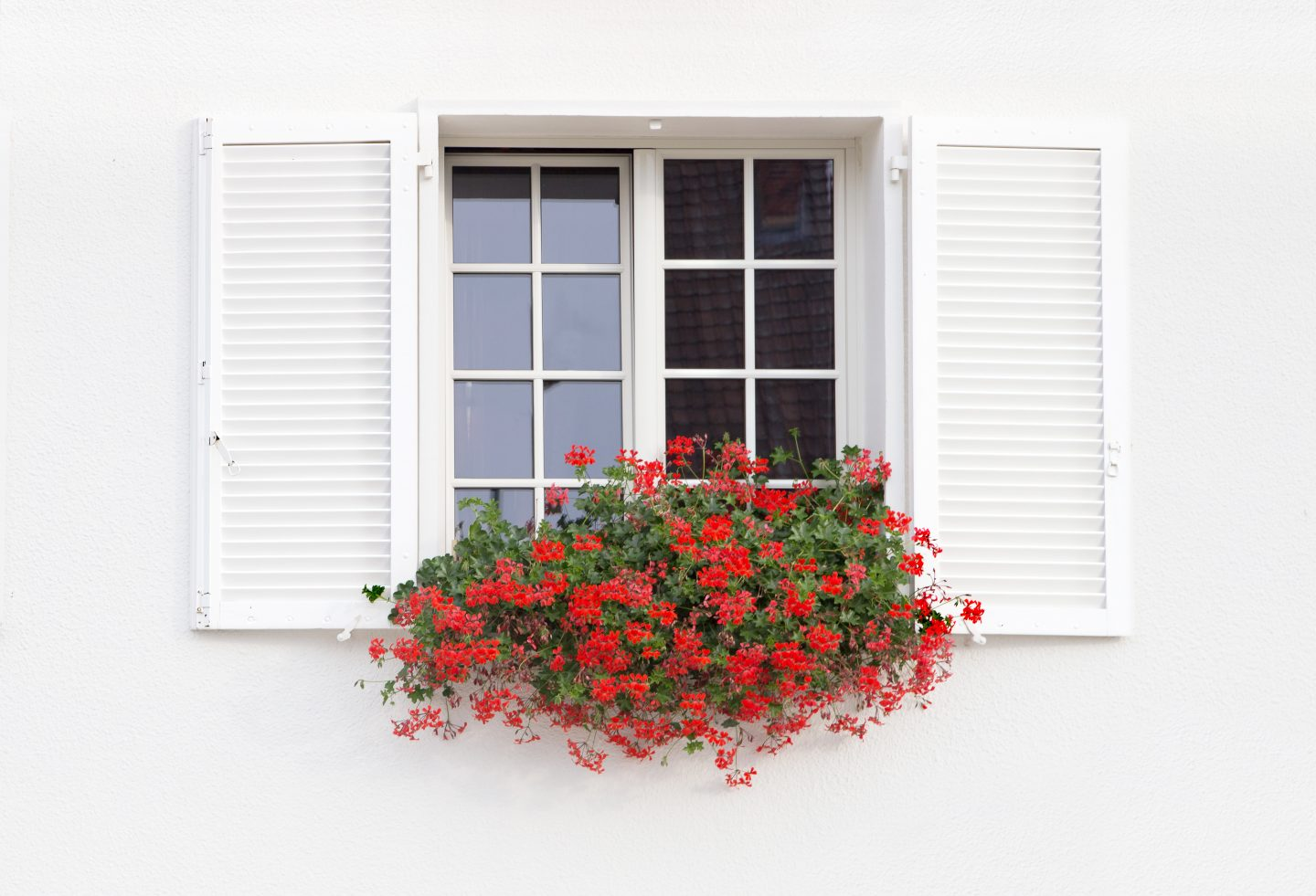 White window with shutters and flowers on the white wall background